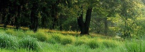 Łąka w ogrodzie